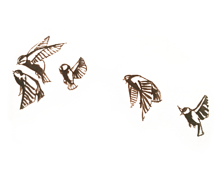 Dibujos de pájaros volando